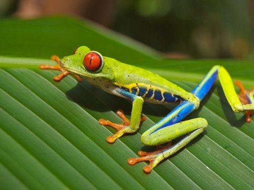 Costa Rica a tu aire desde 542€